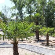 palmy portal.jpg